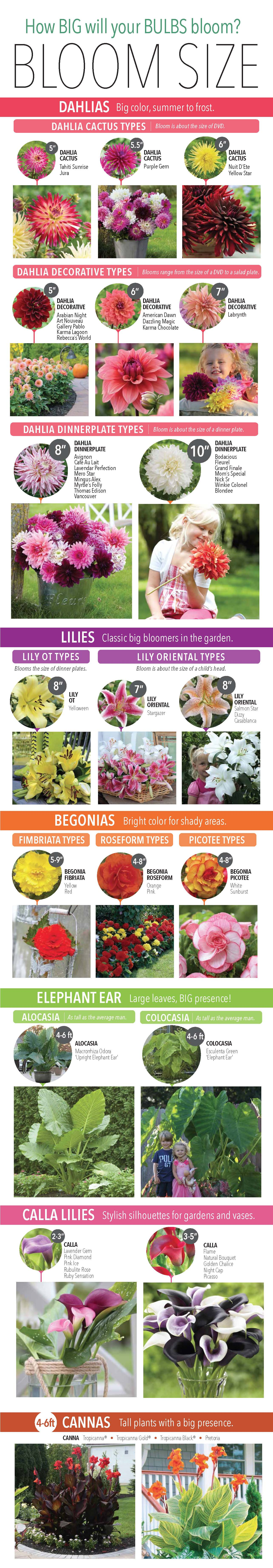 BloomSize_infographic.2