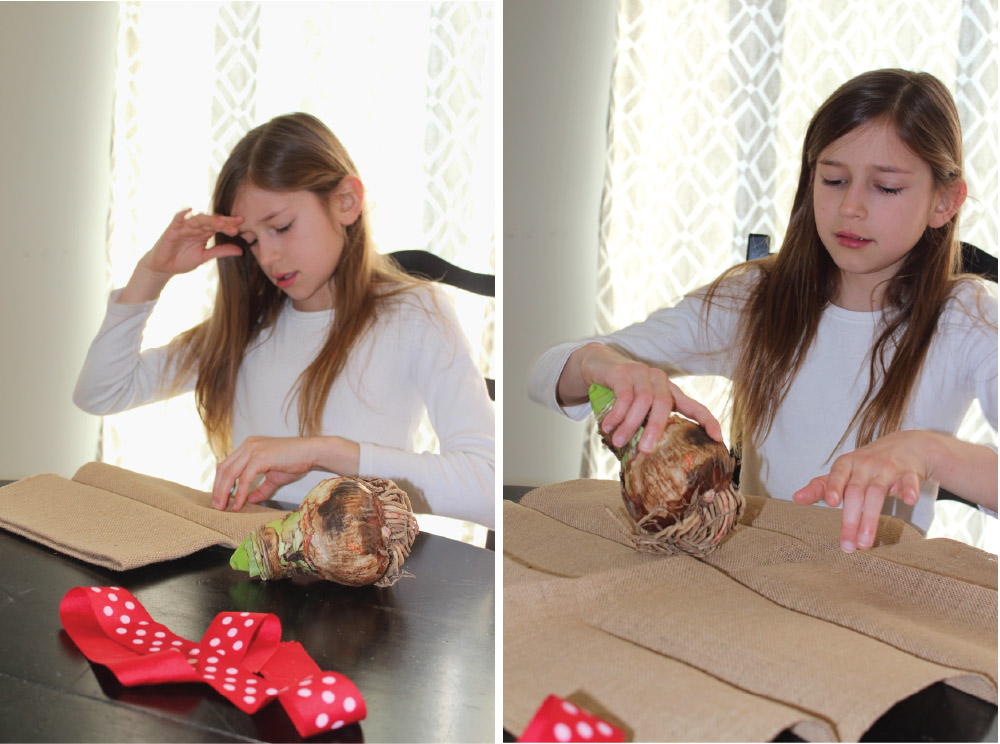 Longfield-Gardens_Amaryllis-Simple-Gift-Ayla-wrapping.jpg