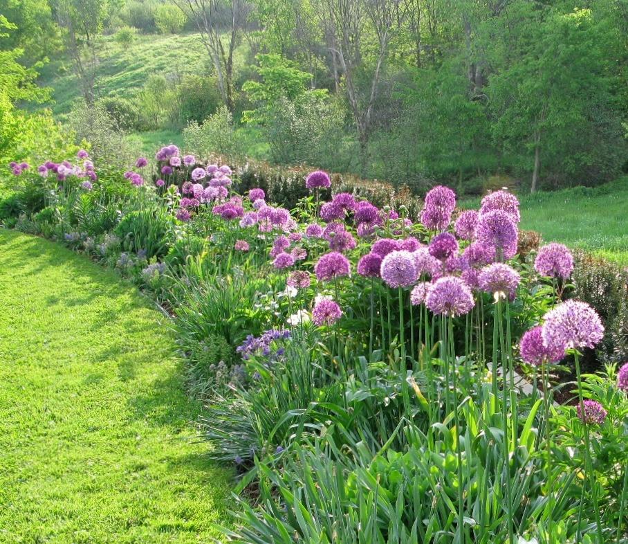 6 Reasons Your Flower Garden Needs Alliums Longfield Gardens