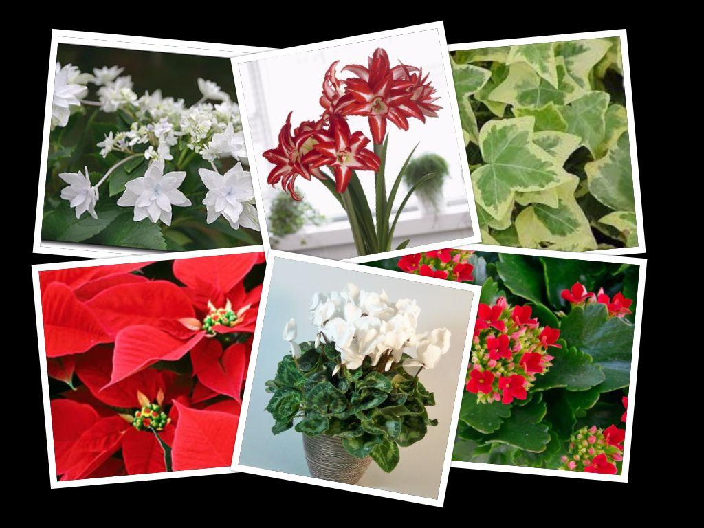 companion plants for amaryllis