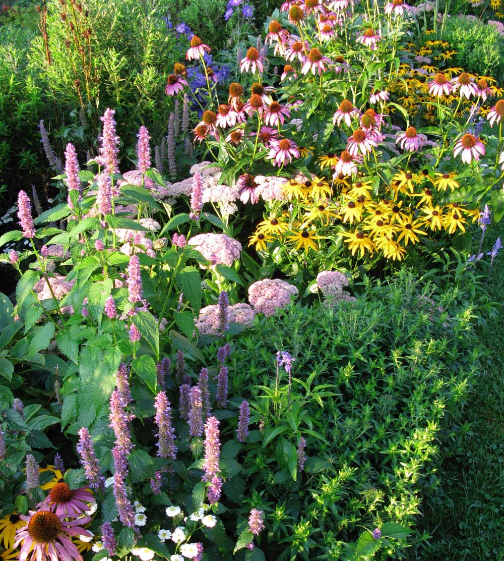 Annuals With Perennials