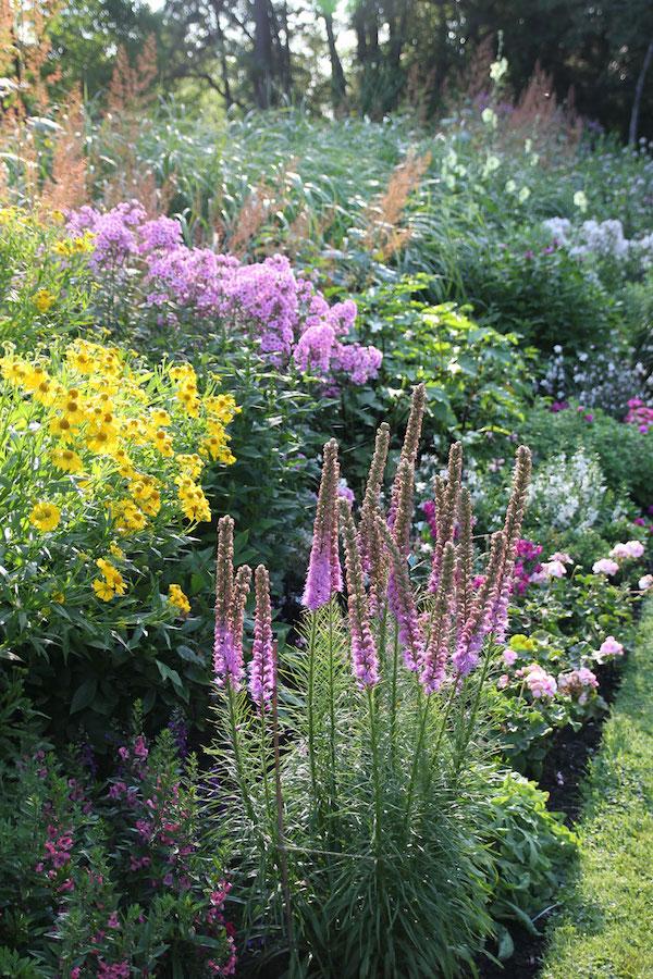 perennial-garden-with-liatris.jpg