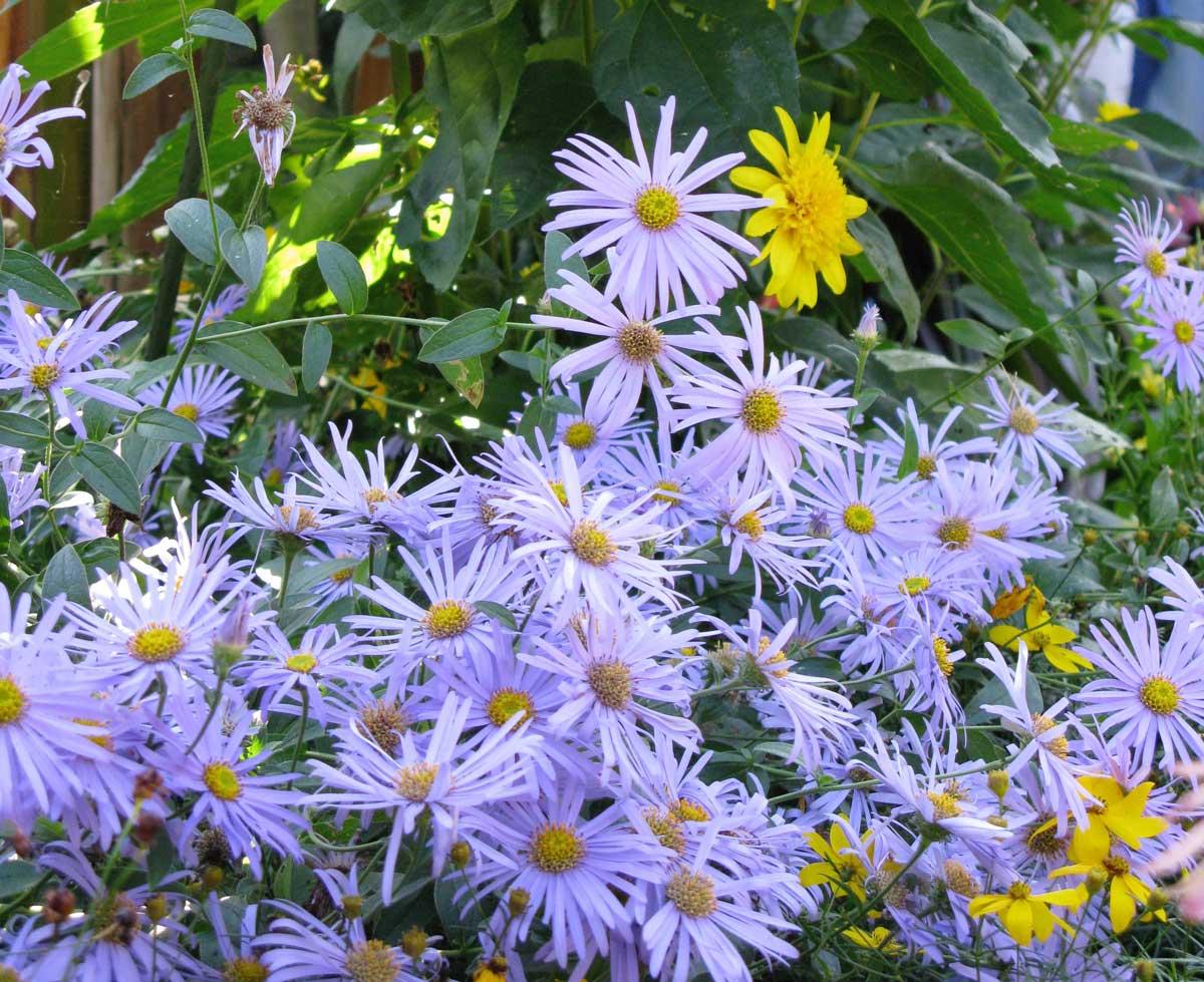 Atraer abejas beneficiosas a su jardín   HGTV