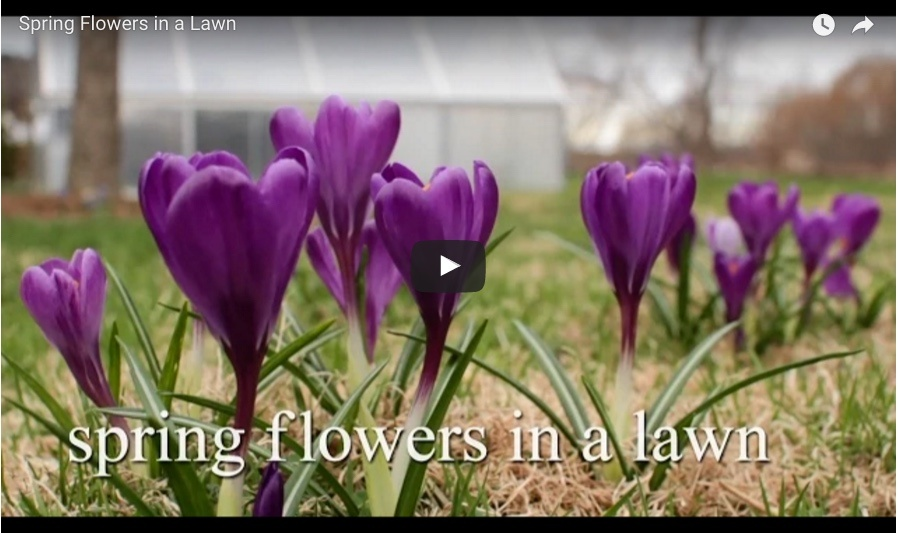 video_planting_flowers_in_a_lawn.jpg