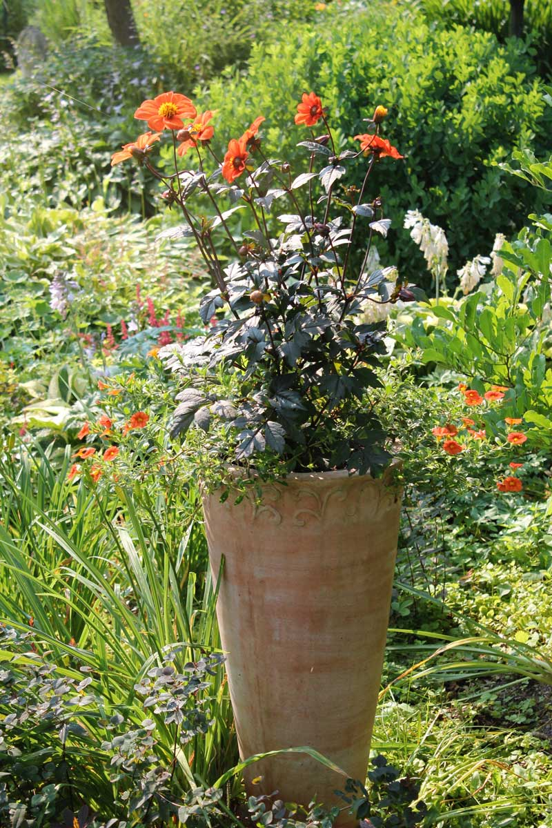 How to keep container plants looking their best for How to maintain garden plants