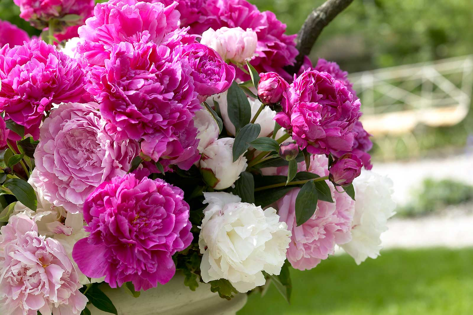 mixed-herbaceous-peony-bouquet.jpg