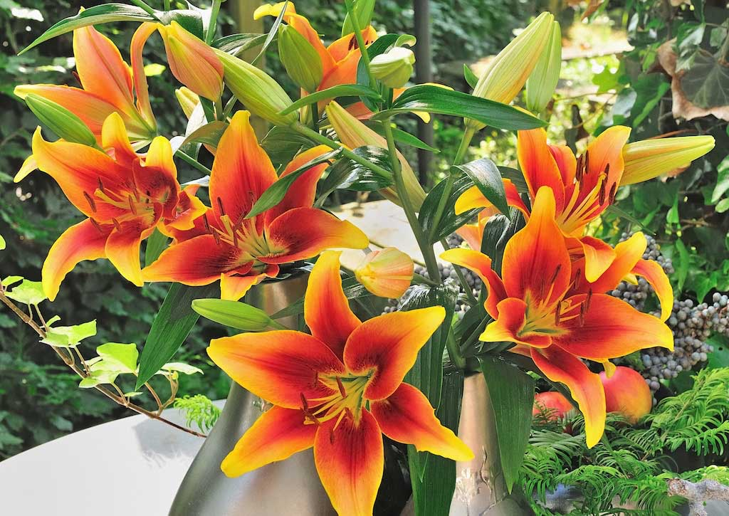 Kaveri-Lily.jpg