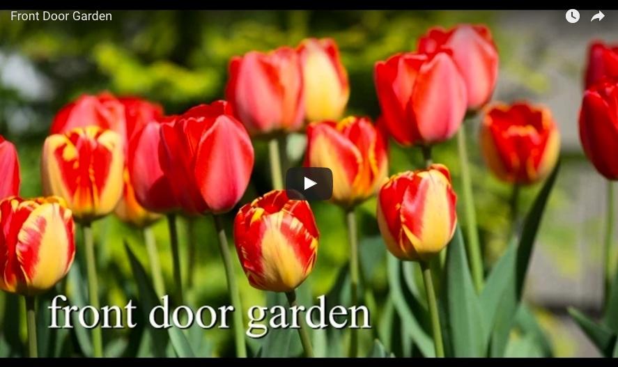 bulbplantingvideo2.jpg