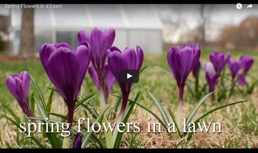 bulbplantingvideo3.jpg