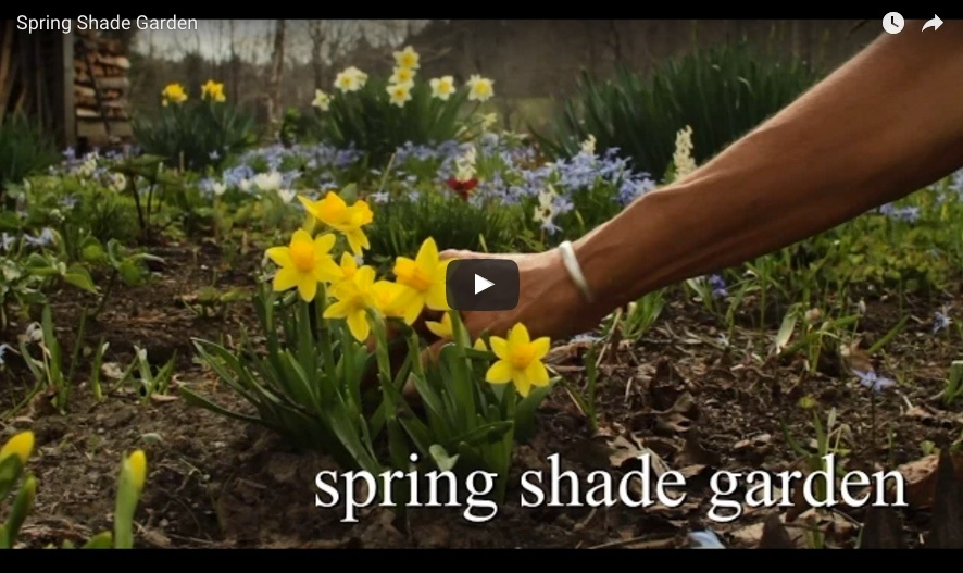 bulbplantingvideo5.jpg