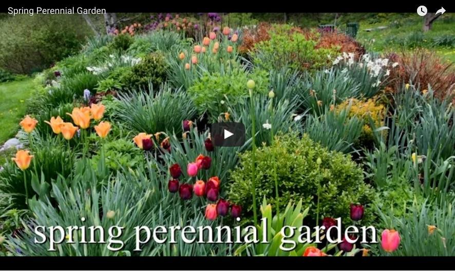 bulbplantingvideo6.jpg