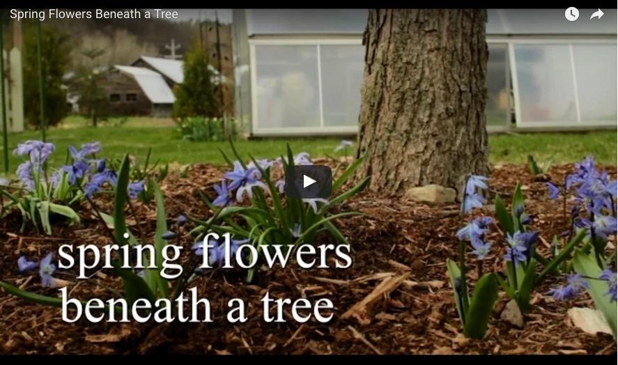 bulbplantingvideo7.jpg