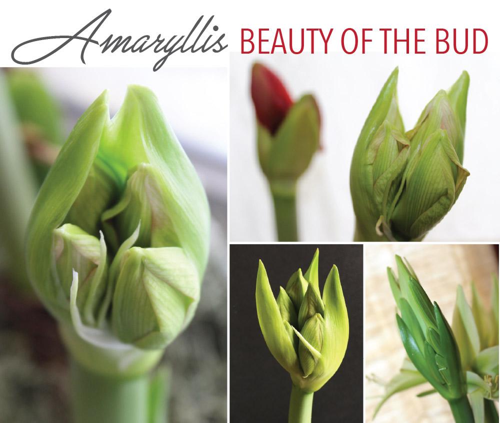 Beauty-of-the-Bud-Longfield-Gardens1.jpg