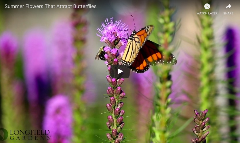 liatris video