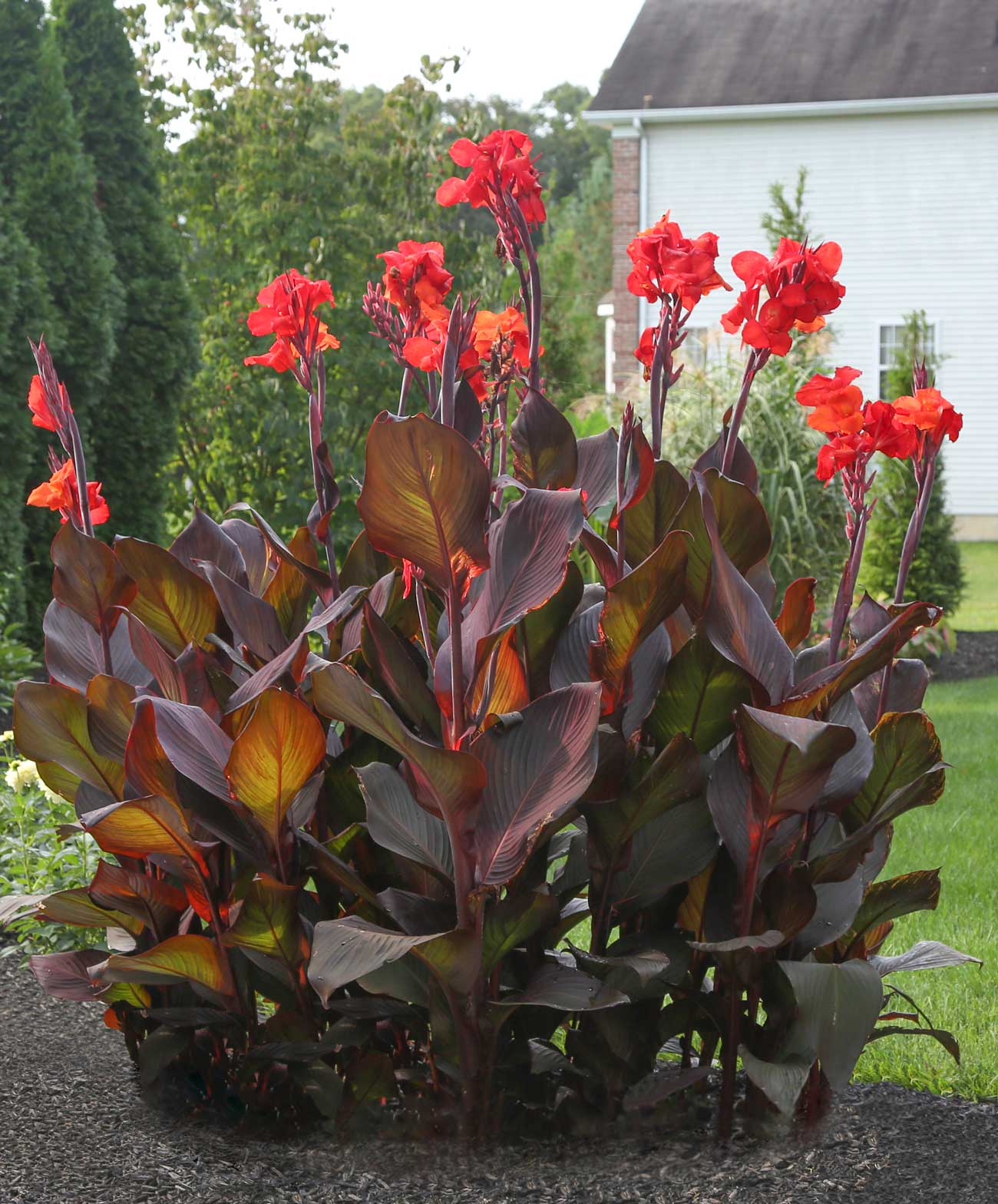 patio planters ideas with Fresh Ideas For Growing Cannas on Real Flame 11813LP Sedona 66 Rectangle Propane Fire Table 11813LP BF JFP1854 besides Howard Miller Ithaca Round Game Table 699012 additionally Fresh Ideas For Growing Cannas additionally Small Balcony Gardens together with Photo Gallery Residential Retaining Walls.