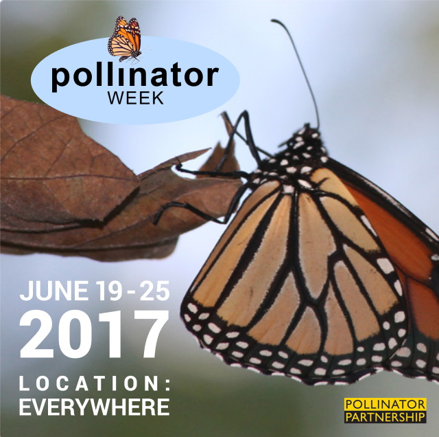 national pollinator week - Longfield Gardens
