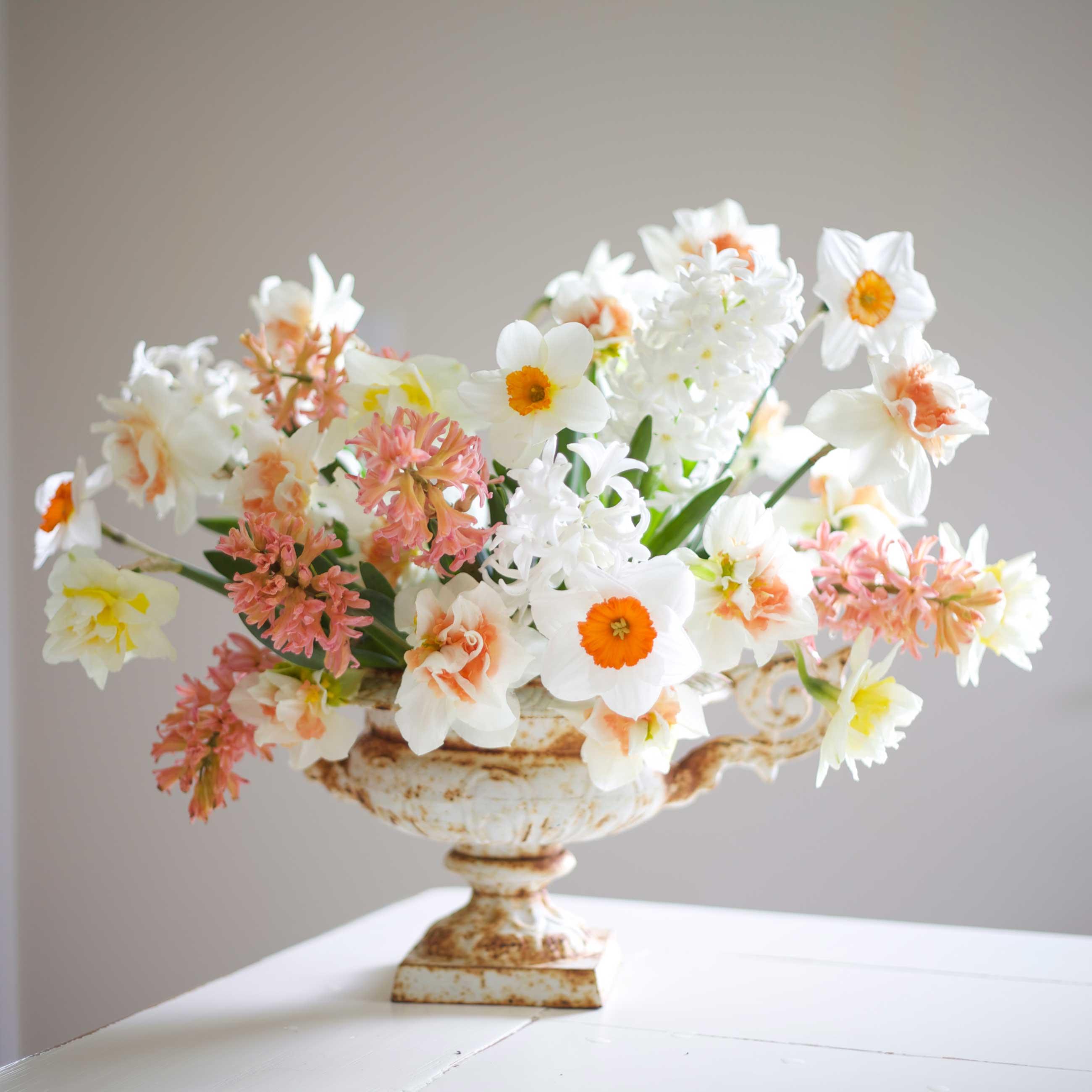 Hyacinth and Daffodil Arrangement—Longfield-Gardens