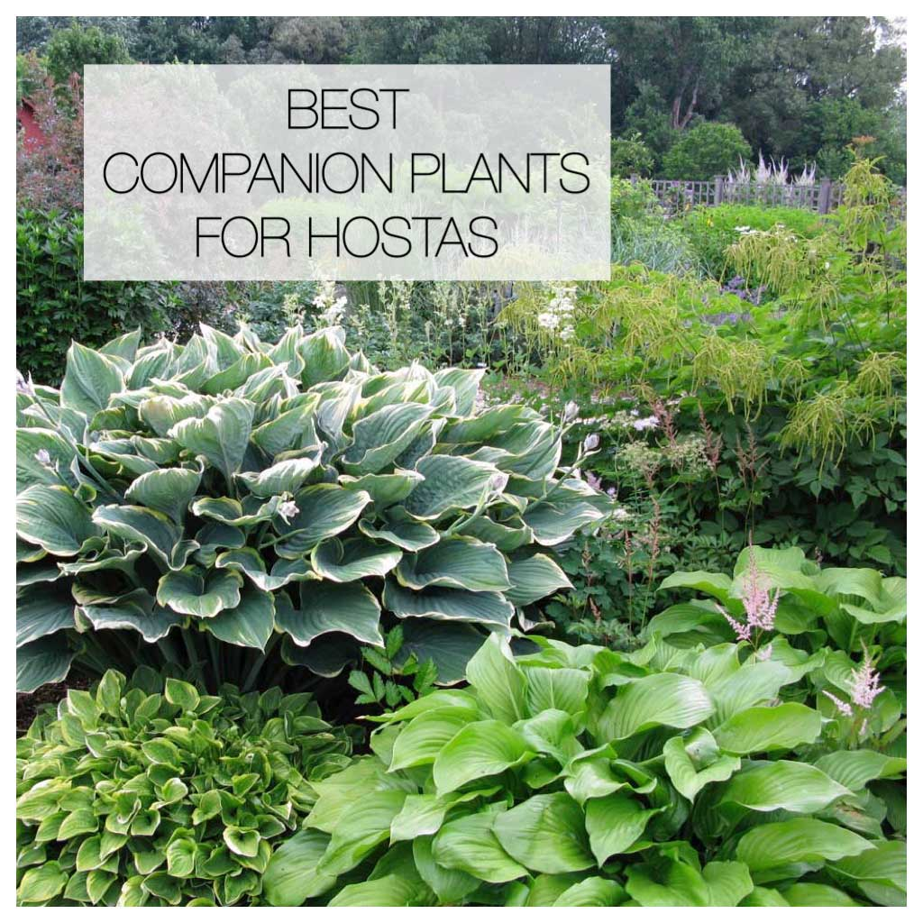 Longfield gardens bulbs and bare root perennials for Best flowers for backyard gardens