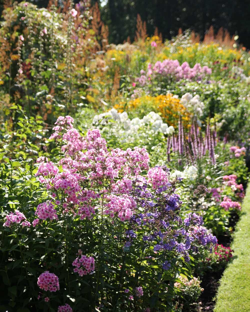 Perennial Garden Maintenance