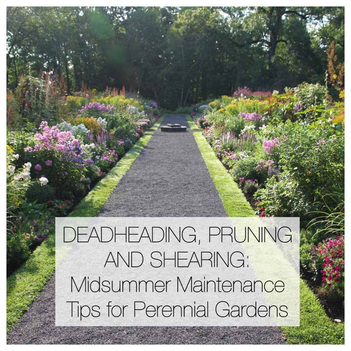 Midsummer maintenance tips for perennial gardens for Perennial garden maintenance
