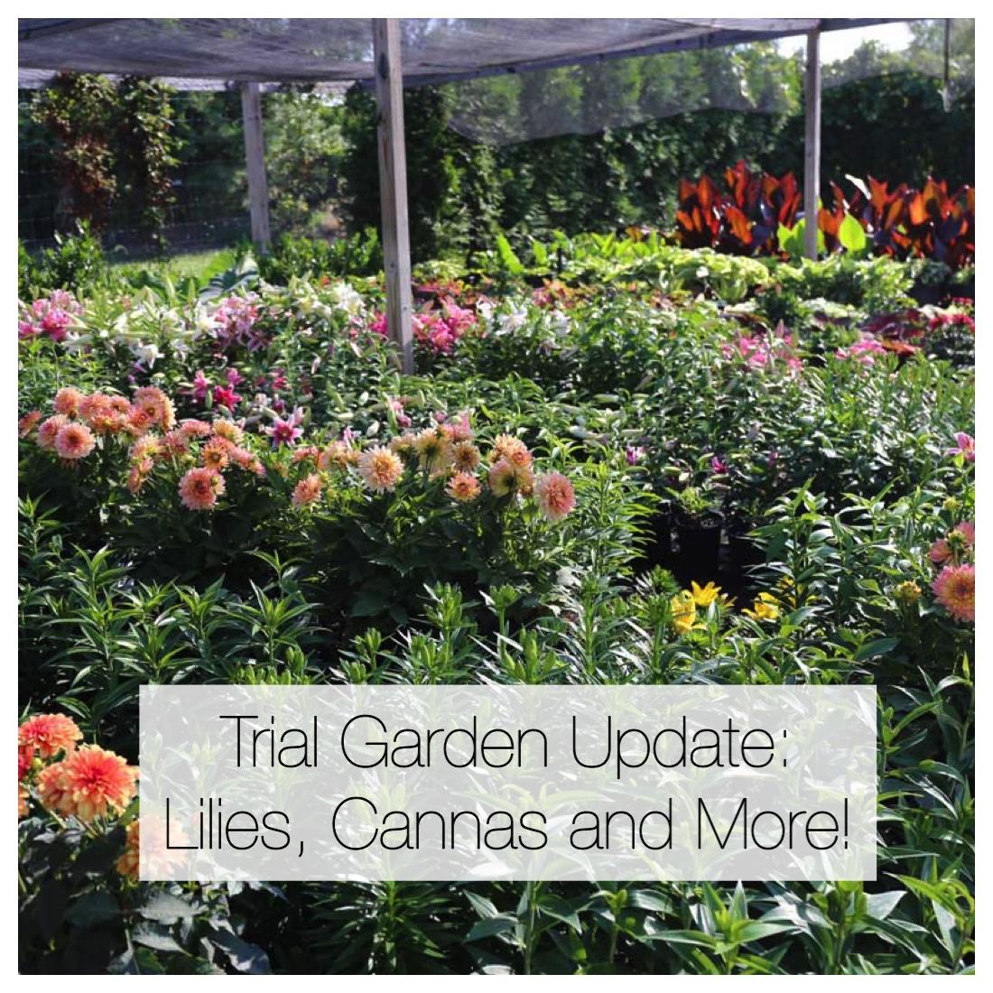 Trial Garden Update - Longfield Gardens