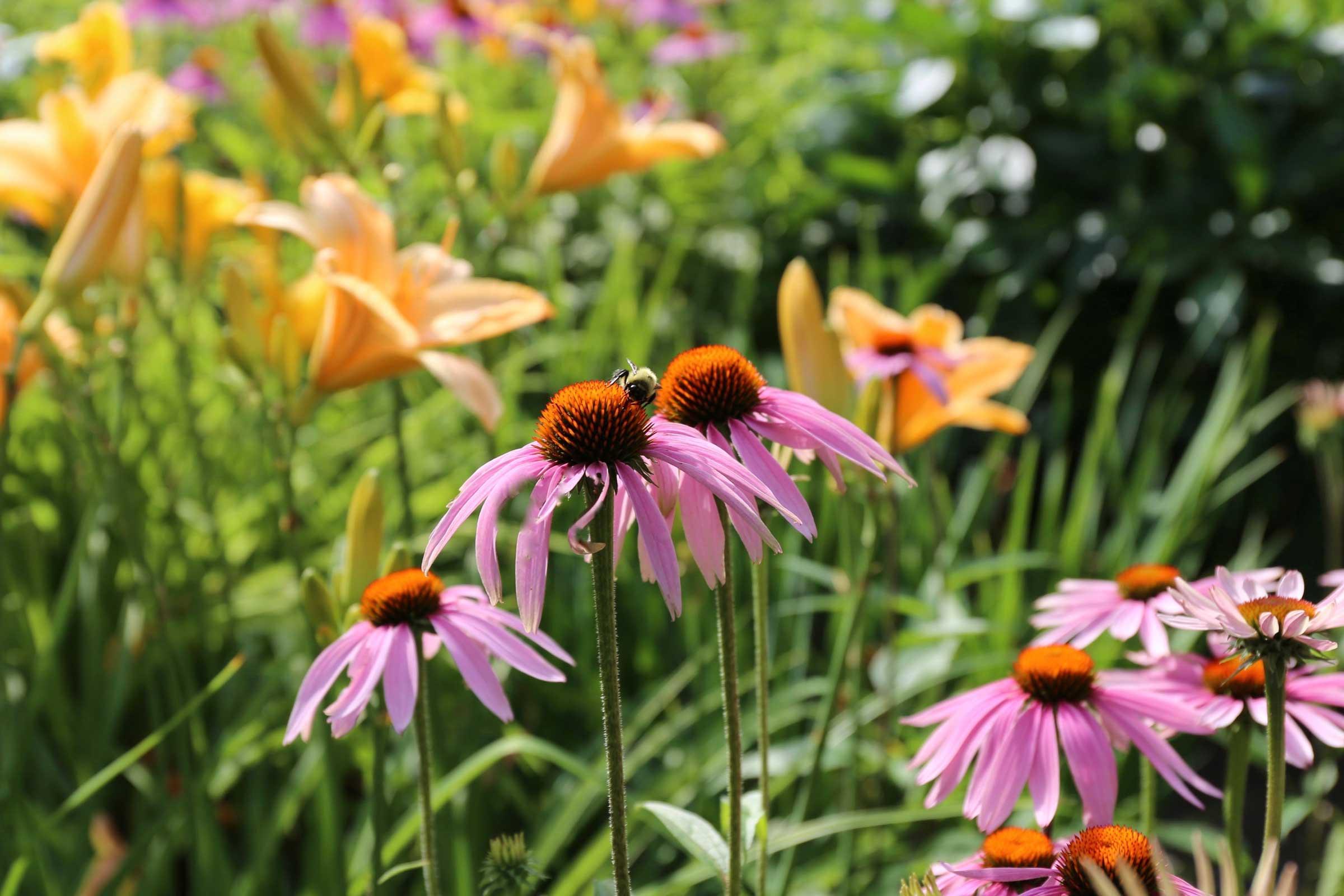 Perennial gardens maintenance tips for july garden pics for Perennial garden maintenance