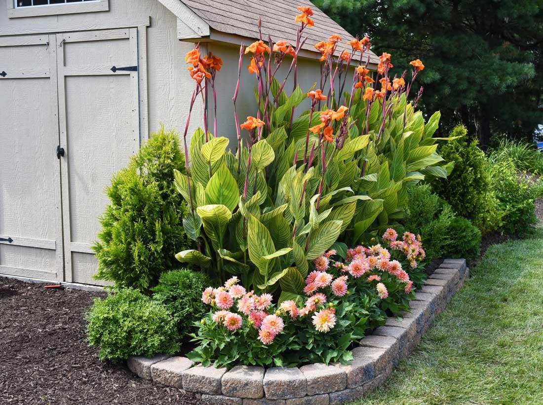 Late Summer Bulbs Hit Their Stride - Longfield Gardens