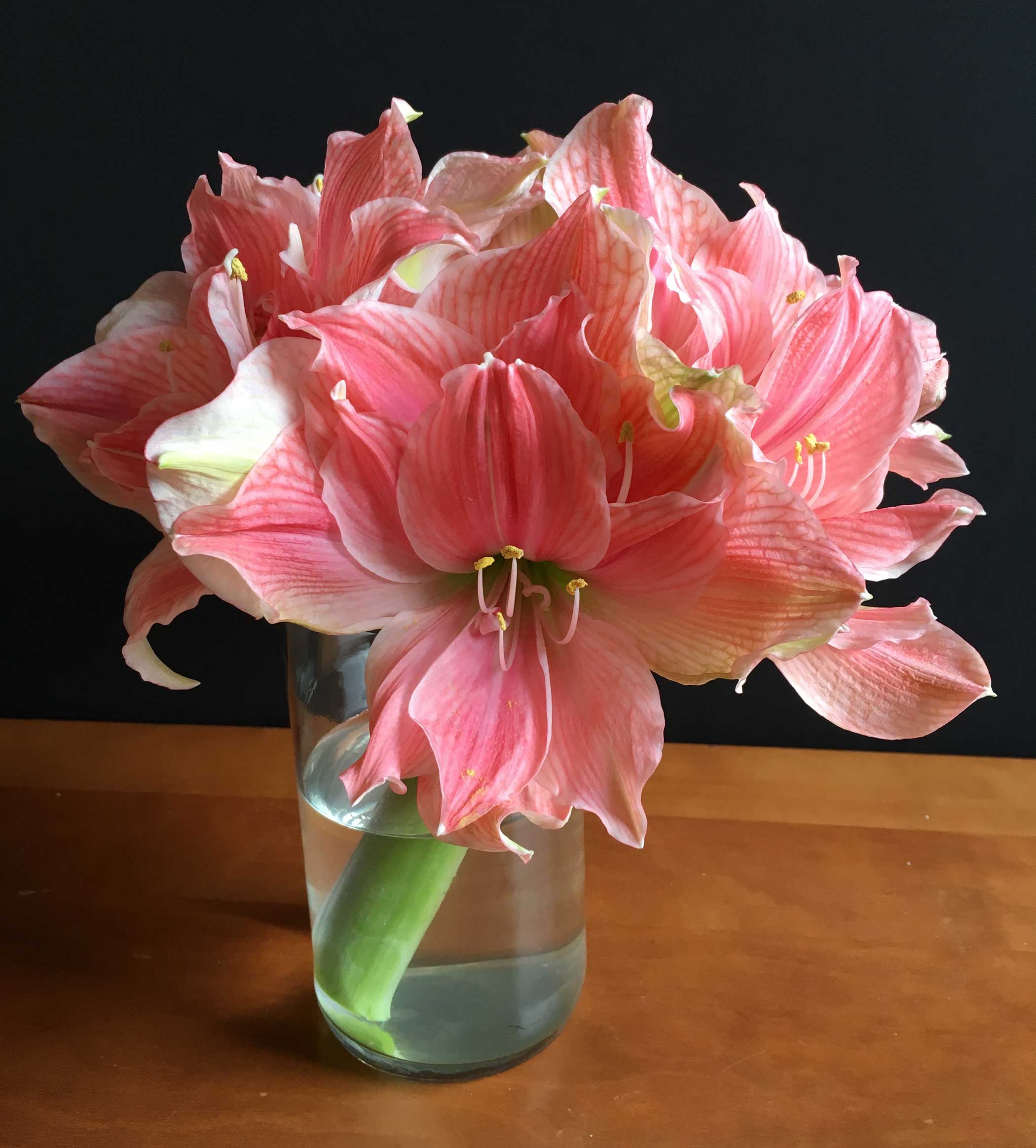 How to use amaryllis as cut flowers longfield gardens for Vase amaryllis