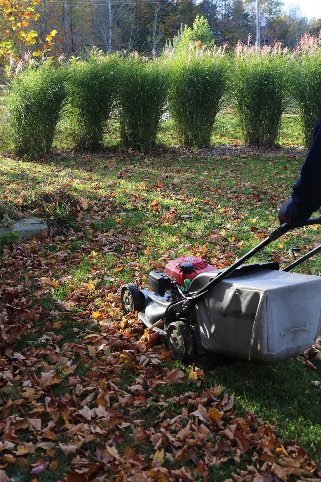 Shredded Leaves are Garden Gold - Longfield Gardens