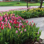 The Tulip House - Bulb Garden Inspiration