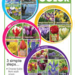 Spring Bloom Times - Enjoy 60 Days of Color!