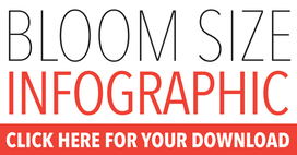 Bloom Size Infographic Click Here