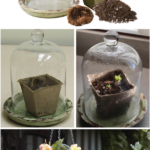 Using Terrariums to Force Begonias Indoors