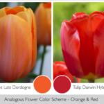 Radiant Red & Orange In The Garden