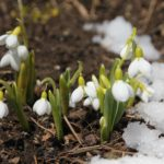 Plan Ahead for the First Flowers of Spring