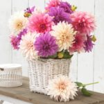 Falling In Love With Dinnerplate Dahlias
