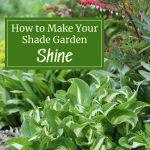 How to Make Your Shade Garden Shine