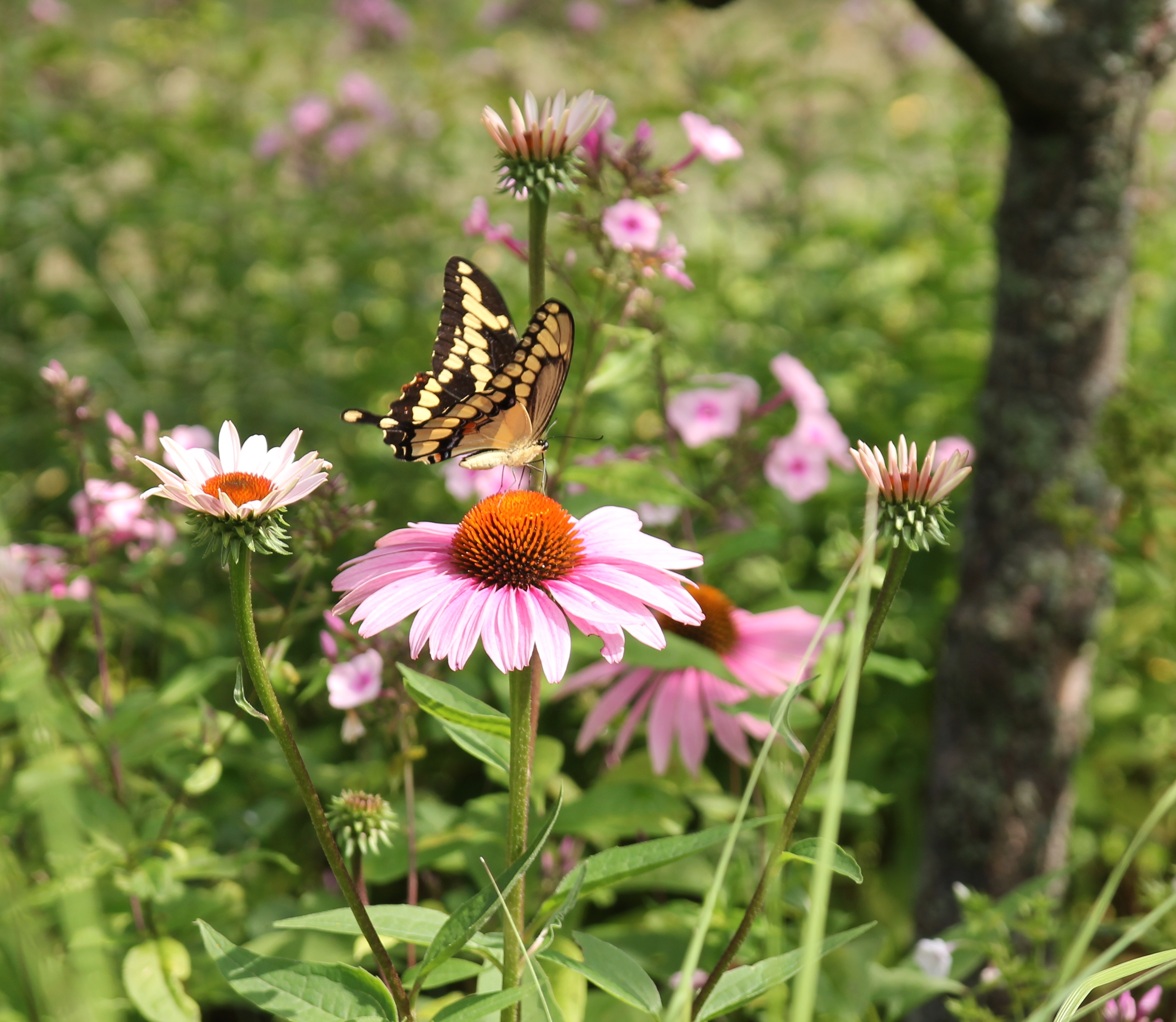 Make Your Flower Garden More Butterfly-Friendly - Longfield Gardens