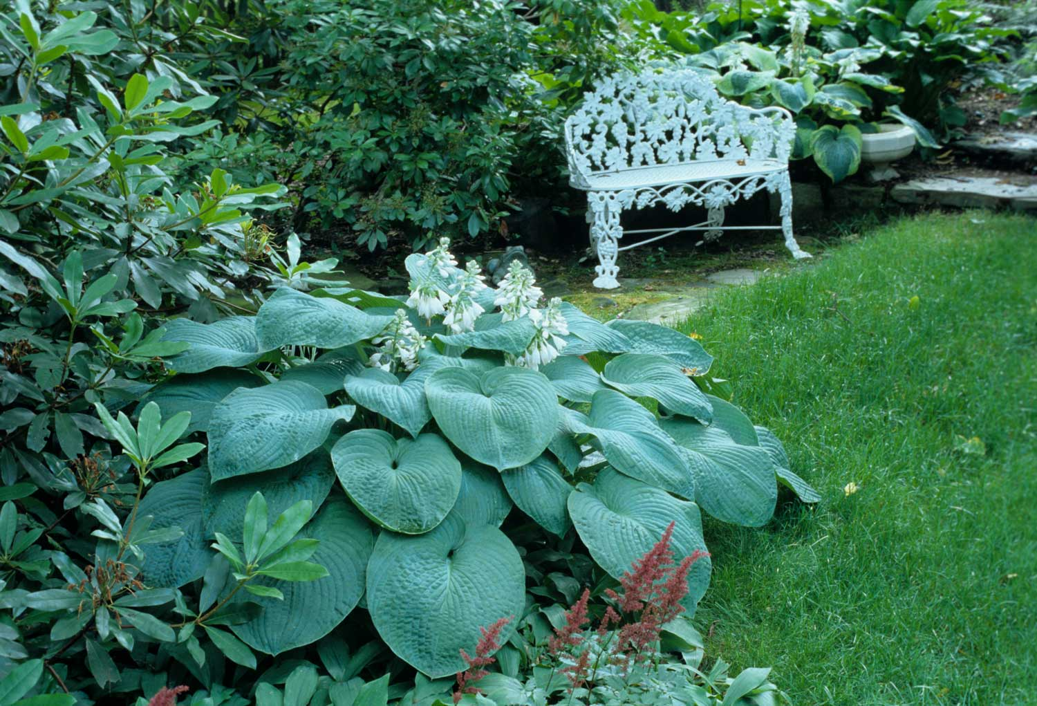 bench-in-shady-garden