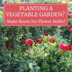 Planting a Vegetable Garden? Make Room for Flower Bulbs!