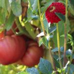 Planting Your Vegetable Garden? Make Room for Flower Bulbs!