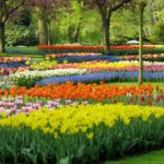 How We Select the Best Spring-Flowering Bulbs for Your Garden