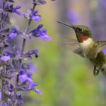Which Flowers Do Hummingbirds Like Best?