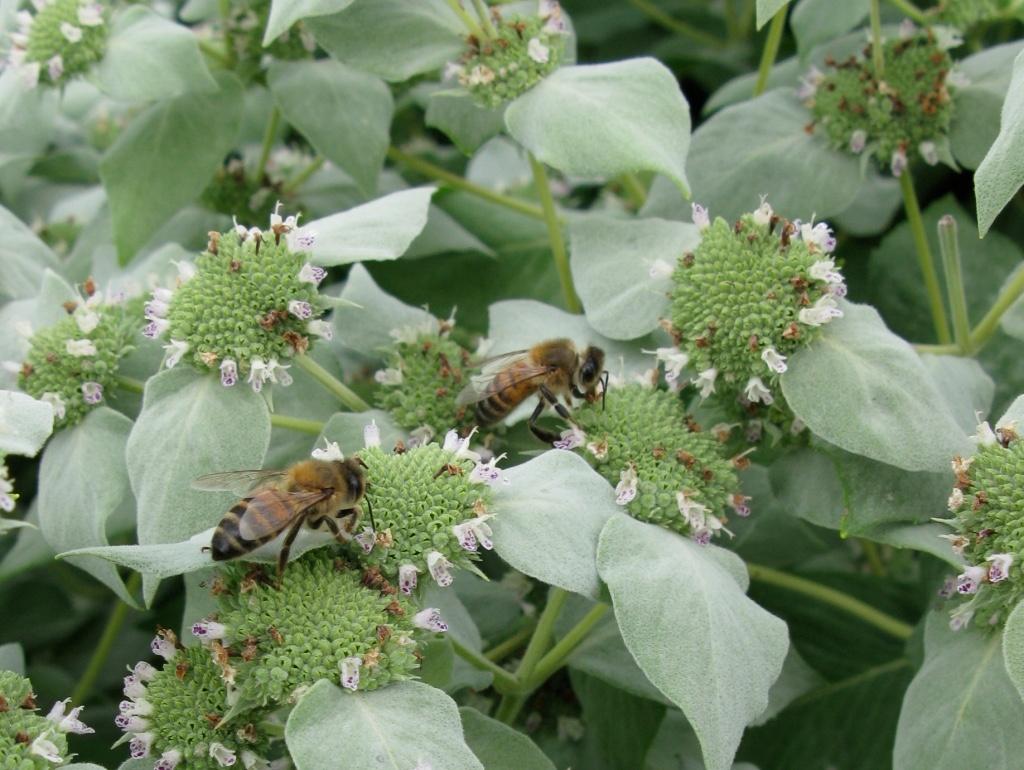 Bee-Friendly Flower Styles - Longfield Gardens
