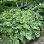 What's Your Favorite Hosta?