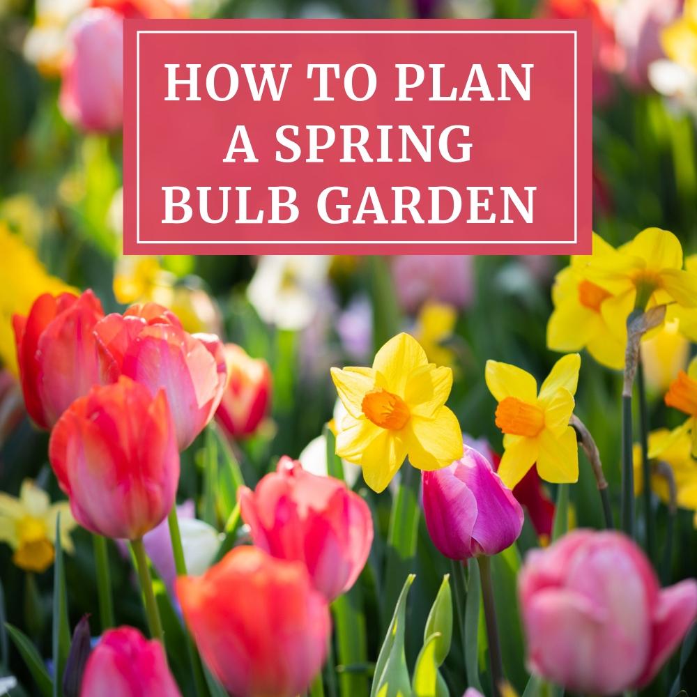 How to Plan a Spring Bulb Garden - Longfield Gardens