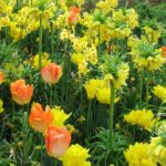 Inspiration for Your Spring Garden: Tulips Go Casual