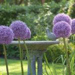 Pick Your Favorite Alliums and Pin It to Win It!