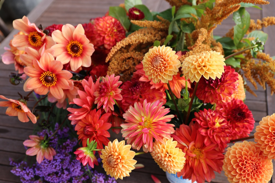 mixed dahlia varieties for cut flowers