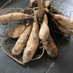 Overwintering Dahlias? Time To Check the Tubers